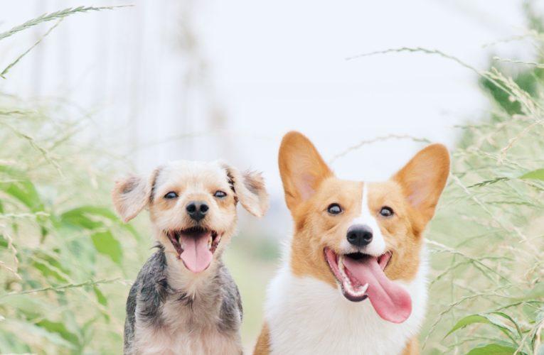 Preventing Home Dog Fights in Miami